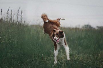 chien-hyperactif