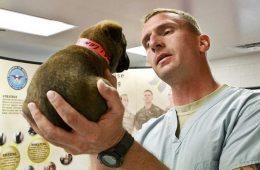 homeopathie-chien